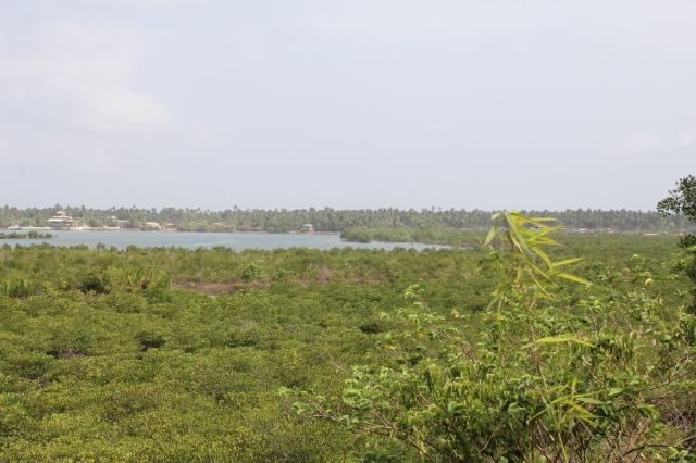 Mangrove Panorama IMG_0582