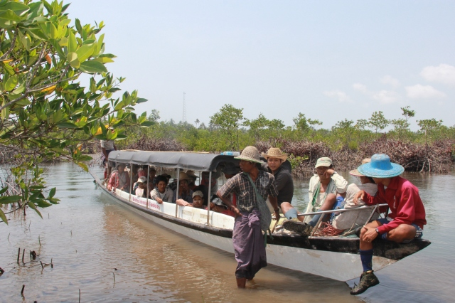 Mangrove Tree Boat River IMG_0768